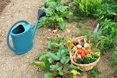 Harvest vegetables three Stock Photos