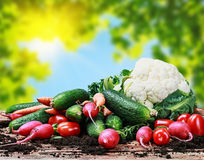 Harvest vegetables on a wooden table Royalty Free Stock Photo