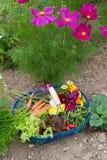 Harvest from the vegetal garden. Blue harvest basket full with vegetals and flowers from the vegetal garden stock photo