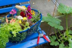 Harvest from the vegetal garden Stock Photo