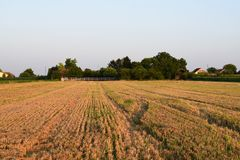 After harvest, Vojvodina, Serbia royalty free stock photography