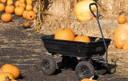 Harvest Wagon Filled with Pumkpins. Thanksgiving. Halloween pumkpins royalty free stock photography