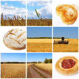 Harvest of wheat Royalty Free Stock Images