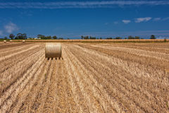 Harvest wheat Stock Photos
