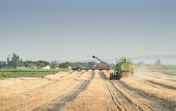 Harvest wheat field Stock Photos