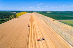 Harvest in wheat field Stock Photos