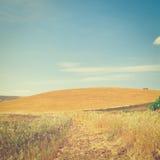 After Harvest Stock Image