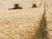 Harvest wheat Royalty Free Stock Photos