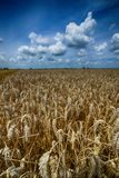 The Harvest Royalty Free Stock Photography
