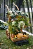 Harvest wheelbarrow Royalty Free Stock Photography
