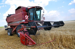 Harvest of winter wheat Royalty Free Stock Photos