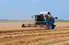 Harvest work. Combine harvester working a wheat field Royalty Free Stock Photo