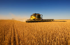 Harvest work Royalty Free Stock Photos