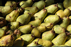 Closeup of yellow pears. Harvest of yellow pears view from above Royalty Free Stock Images