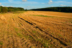 Harvested Agricultural Field Royalty Free Stock Images