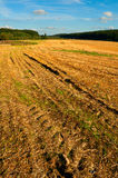 Harvested Agricultural Field Stock Image