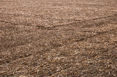 Harvested agriculture field Royalty Free Stock Photography