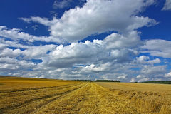 Harvested agriculture land Royalty Free Stock Photos