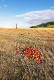 Harvested autumn fields Royalty Free Stock Photo