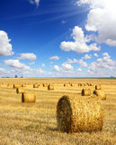Harvested bales of straw in field Stock Images