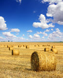 Harvested bales of straw in field Royalty Free Stock Photography