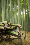 Harvested Bamboo in Forest. A pile of harvested bamboo poles in a bamboo forest. Very shallow depth of field Stock Image