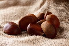 Harvested chestnuts on burlap Royalty Free Stock Photo