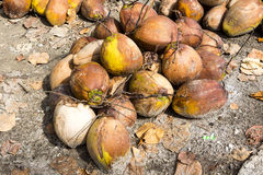 Harvested coconuts on a pile, Nusa Penida -Bali, Indonesia Royalty Free Stock Photo