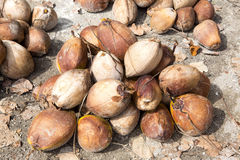 Harvested coconuts on a pile, Nusa Penida -Bali, Indonesia Stock Photography