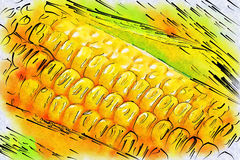 Harvested corn Stock Photo