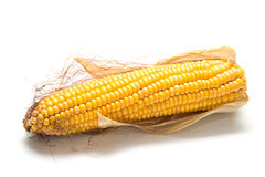 Harvested corn 2. Freshly harvested corn on white background, close up. Isolation, shallow DOF Royalty Free Stock Photos