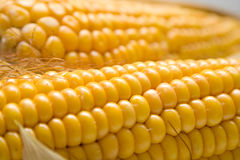 Harvested corn. Freshly harvested corn, close up. Shallow DOF, macro, background Stock Photo