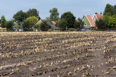 Harvested corn field Stock Images