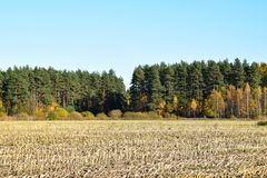 Harvested corn field with remains from the plants. Harvested corn field with remains from the plants on some farmland with forest and a blue sky on a cold Royalty Free Stock Image