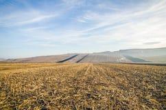Harvested corn field Royalty Free Stock Photo