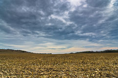 Harvested corn field before the storm at late autumn Stock Image