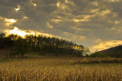 Harvested corn fields under heavy clouds at sunset Royalty Free Stock Photo