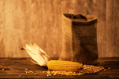 Harvested corn maize cob and grains Royalty Free Stock Images