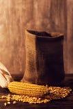 Harvested corn maize cob and grains Stock Photos