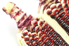 Harvested corn in red and purple Royalty Free Stock Image