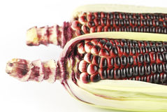 Harvested corn in red and purple Stock Image