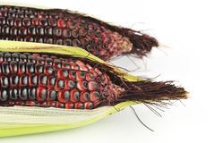 Harvested corn in red and purple Royalty Free Stock Photo