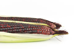 Harvested corn in red and purple colors Stock Images