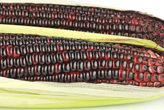 Harvested corn in red and purple colors Royalty Free Stock Photography