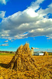 Harvested Corn Stalks in Fall Royalty Free Stock Images