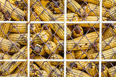 Harvested corn stored in barn Stock Images