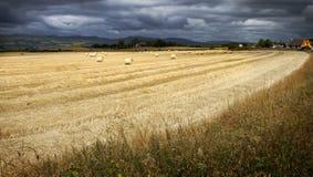 Harvested cornfield stock image