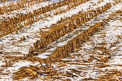Harvested cornfield in wintertime with snow. In Germany Royalty Free Stock Image