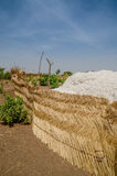Harvested cotton being piled up in traditional reed stockage under the blue African sky in Benin Royalty Free Stock Images