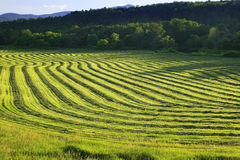 Harvested crop in Stowe, Vermont. Rows of harvested crop on farmland in Stowe Vermont, USA Stock Photos